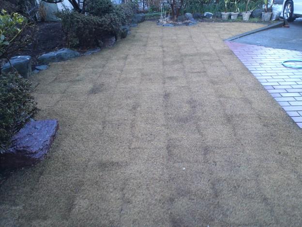 2月の枯芝生