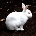 Photos: ウサギ4