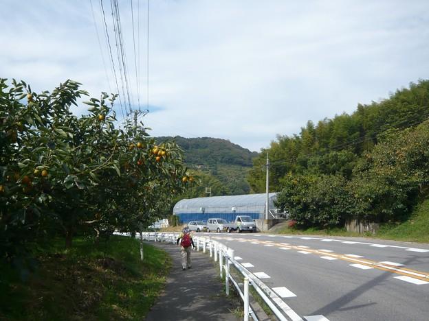 P1310088筆柿の里・幸田