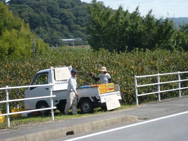 P1310142筆柿の里・幸田