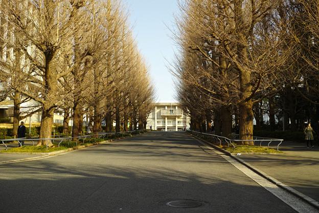 休日のキャンパス(5)