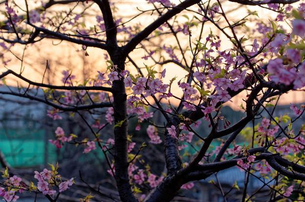 神奈川区の夕陽(1)