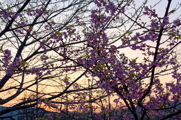 神奈川区の夕陽(2)
