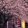 上野の夜桜(1)
