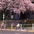 上野の夜桜(2)