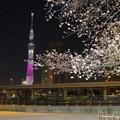 桜色のスカイツリー