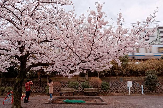 大安寺公園