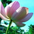 Photos: 20120908_153708