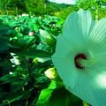 Photos: 20120908_153217