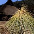 Photos: 京都美山