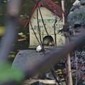Photos: 小学校の池の亀小屋