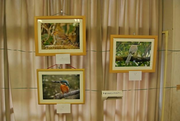 Photos: 自治会作品展(黒鯛ちゃんの野鳥写真3点)