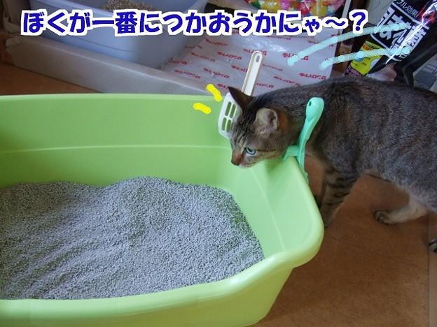 新しい猫砂にゃ
