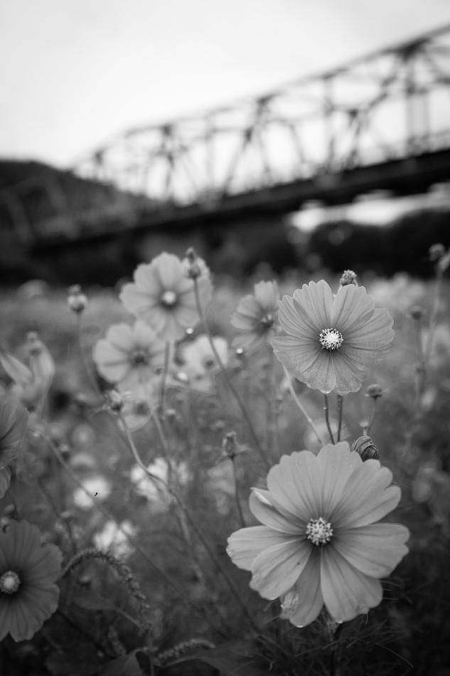 写真: IMG_8136