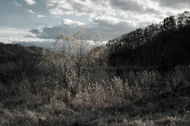枯季の存在