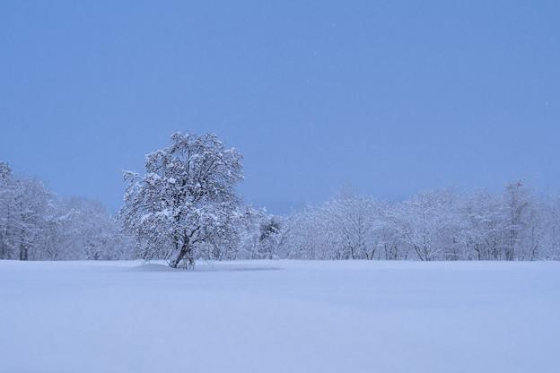 雪原の存在