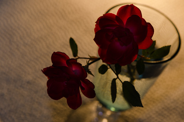 11月の薔薇 16