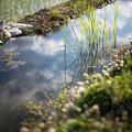 Photos: 畦に満ちる