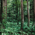 写真: 深理森林