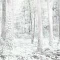 写真: 心理森林