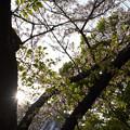 Photos: 初夏の社