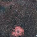 Photos: 光害地で撮るシリーズ No.2 - バラ星雲
