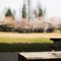 Photos: ベンチから