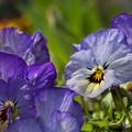 Photos: 春にみる