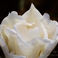 Photos: 白の彫刻