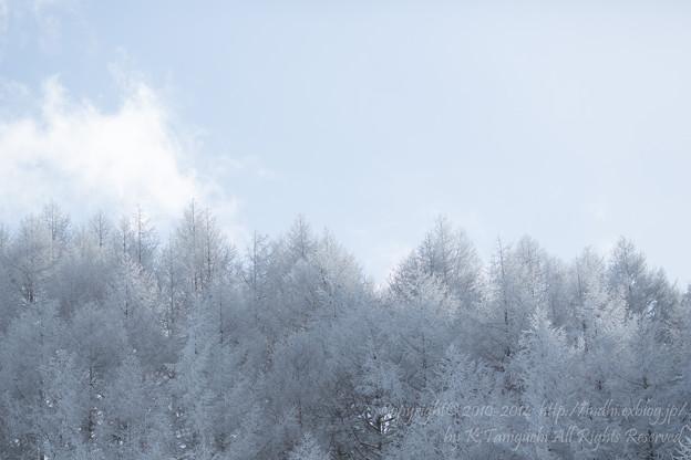 写真: 樹氷