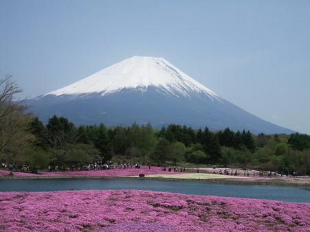 富士芝桜8