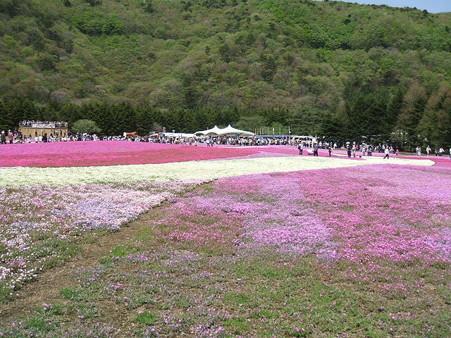 富士芝桜16