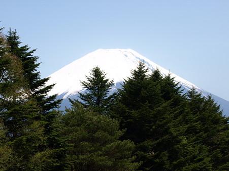 富士芝桜31