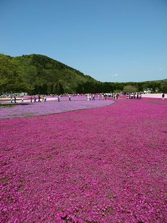 富士芝桜51