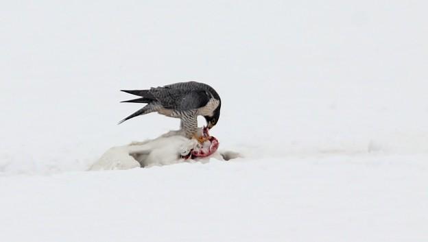 写真: 雪の上のランチ