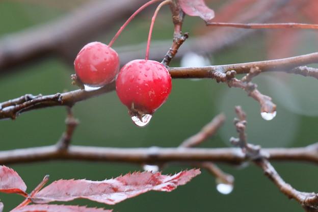 雨中の木戸池2