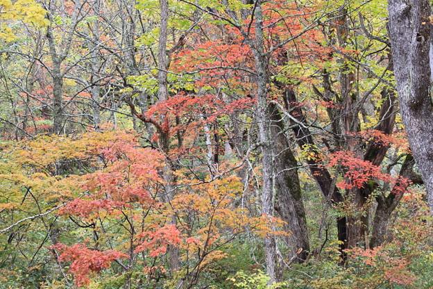 鮮やかな紅葉4