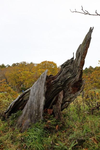 枯れ木のオブジェ
