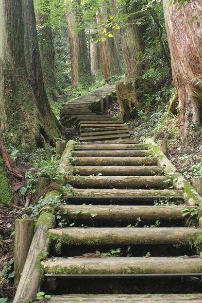 山道の木の階段