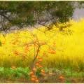 小ちゃな柿の木のある風景