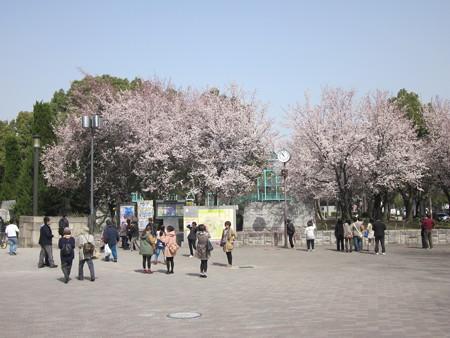 005大阪城の桃♪