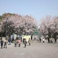 Photos: 005大阪城の桃♪