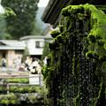 写真: 苔と水車と
