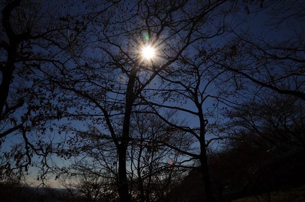 2014-01-19 ニコン 二宮よさこい 菜の花富士山 204