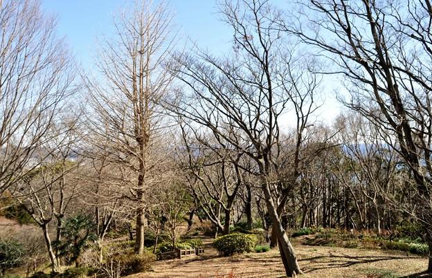 2014-01-19 ニコン 二宮よさこい 菜の花富士山 222