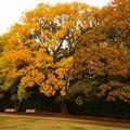 Photos: Season of yellow