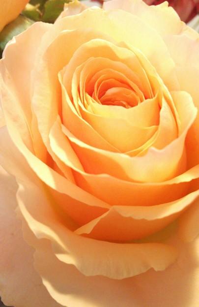 バラの花... ♪*゜