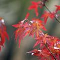写真: 庭先の秋