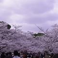 Photos: ちょこっとお城と桜