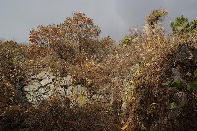 藪の先にも石垣